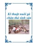 Kĩ thuật nuôi gà chăn thả sinh sản