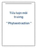 """Tiểu luận môi trường """" Phytoextraction """""""