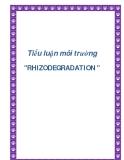 """Tiểu luận môi trường """" RHIZODEGRADATION """""""