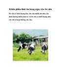 Khẩu phần thức ăn hàng ngày cho bò sữa