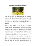 Loài ong làm mật như thế nào?