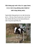 Hội chứng ngã nước trâu, bò, ngựa, hươu do ký sinh trùng đường máu