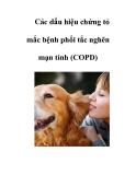 Các dấu hiệu chứng tỏ mắc bệnh phổi tắc nghẽn mạn tính (COPD)
