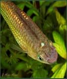 Thức ăn trong nuôi trồng thủy sản - Phạm Thị Khanh