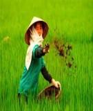 Phân bón cho cây lúa