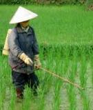 Danh mục thuốc trừ bệnh hại lúa