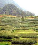 Giáo trình nông lâm kết hợp chương 3 : Mô tả và phân tích các hệ thống nông lập kết hợp