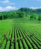 Giáo trình nông lâm kết hợp chương 2 : Nguyên lý về nông lâm kết hợp
