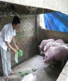 Giáo trình Chăn nuôi lợn - chương 1