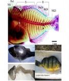 Bệnh do vi khuẩn Pseudomonas gây bệnh ở động vật thủy sản