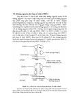 Giáo trình Vi sinh vật học part 10