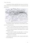 Giáo trình đa dạng động vật part 10