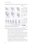 Giáo trình đa dạng động vật part 6