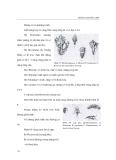 Giáo trình đa dạng động vật part 9