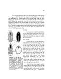 Giáo trình Hình thái giải phẩu học thực vật part 10