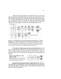 Giáo trình Hình thái giải phẩu học thực vật part 9