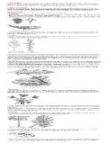 Ôn tập : Sinh học 12 phần 7