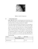 Tìm hiểu về hạt neutrino