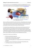 Photoshop CS - Chương 15 -Tạo lập các liên kết bên trong một bức ảnh
