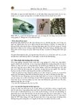 Bênh học thủy sản tập 4 part 2