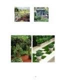 Cách tạo dựng không gian xanh cho ngôi nhà part 2