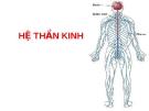 HỆ THẦN KINH THỰC VẬT