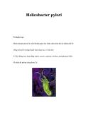 Helicobacter pylori