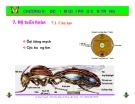 Bài giảng côn trùng : Đặc điểm giải phẫu côn trùng part 3