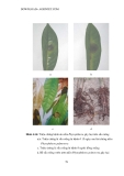 Luận văn : Chọn lọc và nhân sinh khối nấm Trichodema đối kháng với nấm gây hại cây trồng part 7