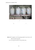 Luận văn : Chọn lọc và nhân sinh khối nấm Trichodema đối kháng với nấm gây hại cây trồng part 8