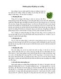 Phương pháp để giống rau muống