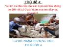 Chủ đề 4: Vai trò và nhu cầu của các loại axit béo không no đối với cá ở giai đoạn con non (larvae, juvenile)