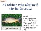 Sự phù hợp trong cấu tạo và tập tính ăn của cá