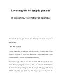 Lavar migrans nội tạng do giun đũa