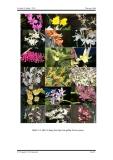 Luận văn : Nhân giống lan Dendrobium bằng phương pháp gieo hạt in-vitro part 2