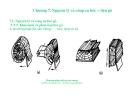 Bài giảng nguyên lý cắt gọt gỗ : Nguyên lý và công cụ bóc – tiện gỗ part 1