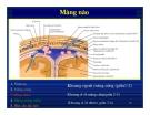 Bài giảng : Giải phẫu thần kinh đối chiếu chẩn đoán Hình ảnh part 2