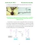 Giáo trình : Kỹ thuật nhân giống in vitro part 4
