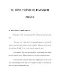 SỰ HÌNH THÀNH HỆ TIM MẠCH PHẦN 2