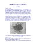 BỆNH MBV (Monodon Baculovirus) TRÊN TÔM SÚ