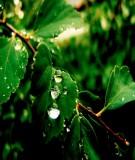 Mô hình hóa môi trường - Mô hình chất lượng nước QUAL2E và QUAL2K