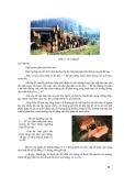 Giáo trình : KHAI THÁC VÀ VẬN CHUYỂN LÂM SẢN phần 2
