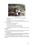 Giáo trình : KHAI THÁC VÀ VẬN CHUYỂN LÂM SẢN phần 4