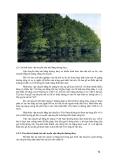 Giáo trình : KHAI THÁC VÀ VẬN CHUYỂN LÂM SẢN part 8
