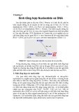 Chương 5  Sinh tổng hợp Nucleotide và DNA