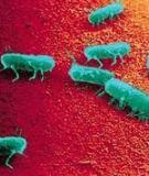 Vi sinh vật - Ức chế vi sinh vật bằng các tác nhân vật lý và hóa học