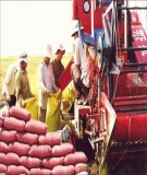 Giáo trình bảo quản nông sản - Chương 5: Môi trường bảo quản nông sản