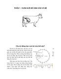 Khuyến nông chăn nuôi bò sữa - Phần 7: Chăn nuôi bò sinh sản và bê