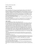 Khi đồng minh tháo chạy Phần 3 - Chương 8 Năm của định mệnh