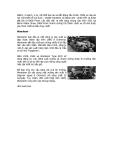 Sổ tay ô tô xe máy part 2